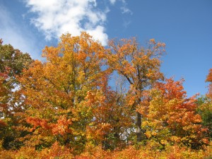 Fall palate at Algonquin Provincial Park